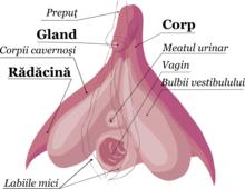 senzație de erecție incompletă