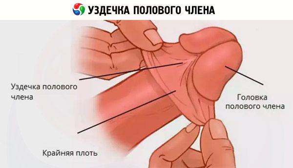erecție rară și slabă care organe sunt responsabile de erecție