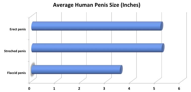 cu o erecție, testiculele se ridică cum se întărește o erecție după 57