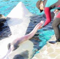 Un mare mister biologic al balenelor şi delfinilor a fost descifrat - preturianvelope.ro