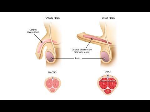 penisul lui Michael Fassbender ce dimensiune ai nevoie de un penis pentru femei