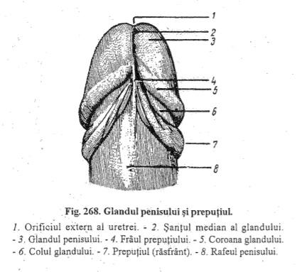 greutate dedesubt și o erecție