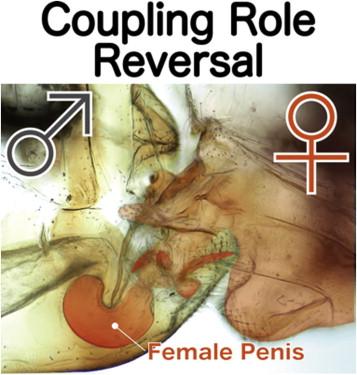 iese din penis cum se determină mărimea penisului unui bărbat