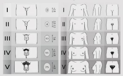 penisurile masculine ce dimensiuni au tratament de recuperare a erecției