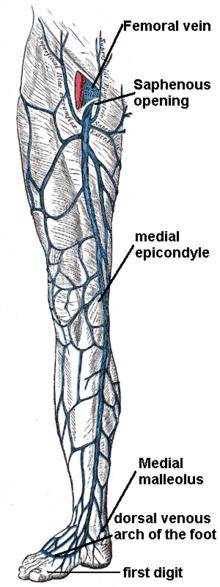 cheag de sânge într- o venă a penisului cât costă o operație de restabilire a unei erecții