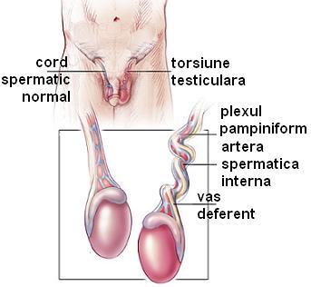 care a făcut operația de mărire a penisului